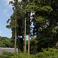 Photos: 円覚寺の新緑(カラー)