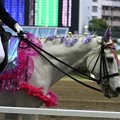 写真: 川崎競馬の誘導馬05月開催 藤Ver-120516-04-large