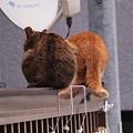 Photos: 猫又発見!