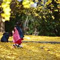 『黄色い絨毯の上で。。。』