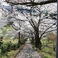 写真: 『春の散歩道。。。』