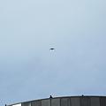 Photos: 電通ビルから飛翔するハヤブサ