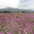 写真: 高原の花畑。?