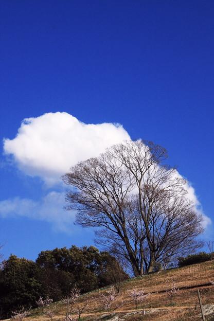 おーい雲よ