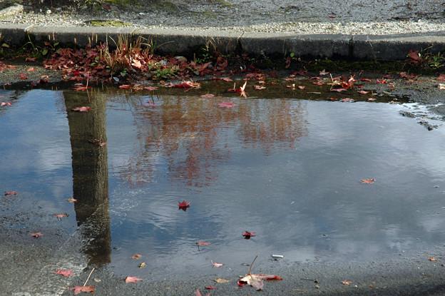 溜まり水に紅葉