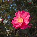 Photos: Flower01222012dp2-01