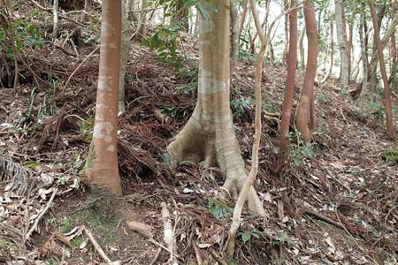 trees03162012dp2-06