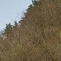 Photos: Trees04082012sd15-06