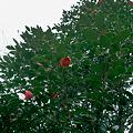 Photos: Flower04092012dp2-06