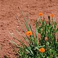 Photos: Flower_CONTAX159MM_Velvia100_05212011-01