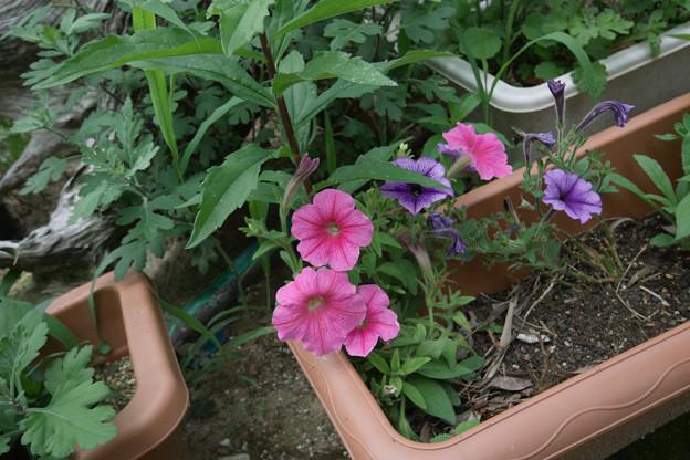 Photos: Flower07022011sd15-03