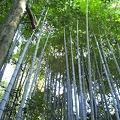 写真: 京都は一乗寺、竹林なう。美しい。