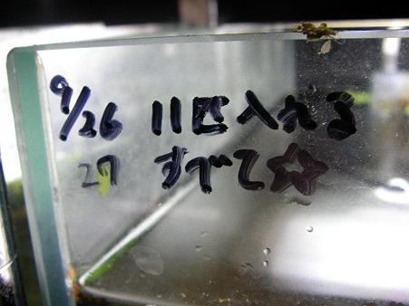 2011/11/26 002