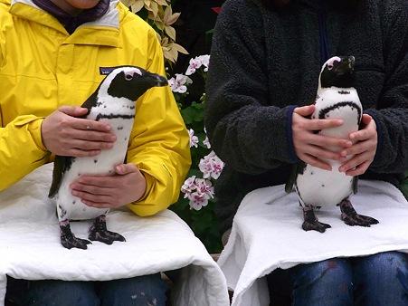 20120331 掛川 ペンギンと記念撮影02