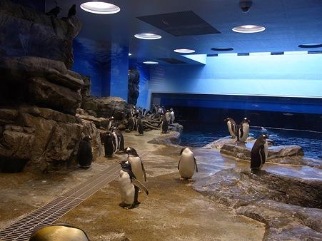 20110815 海響館 亜南極水槽06