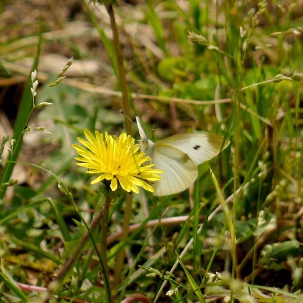 写真: Butterfly