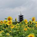 塔と向日葵