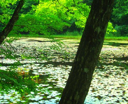 Photos: 風と水と緑