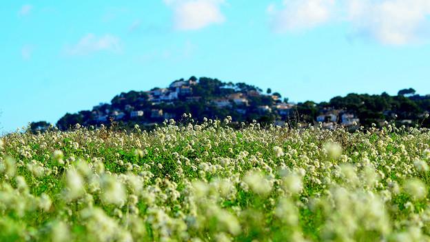 スペインの野原