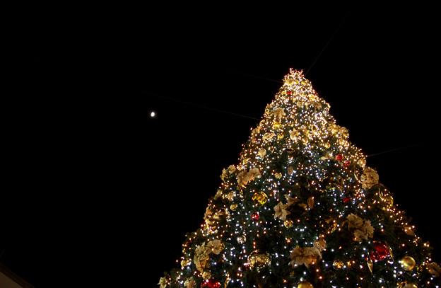 月夜のクリスマスツリー