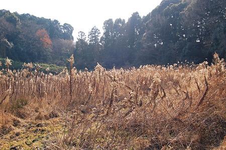 2012年01月09日_DSC_0484長岳寺風景
