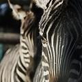 写真: stripe