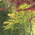 重ね染めの秋~3