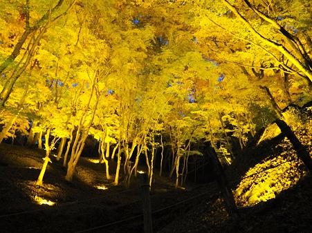 香嵐渓:黄金色のライトアップ