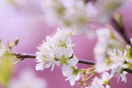 花は朧に~~