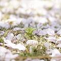 Photos: 春の嵐の中で