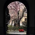 写真: 京都府庁・旧本館27