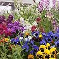 花のみちの花壇