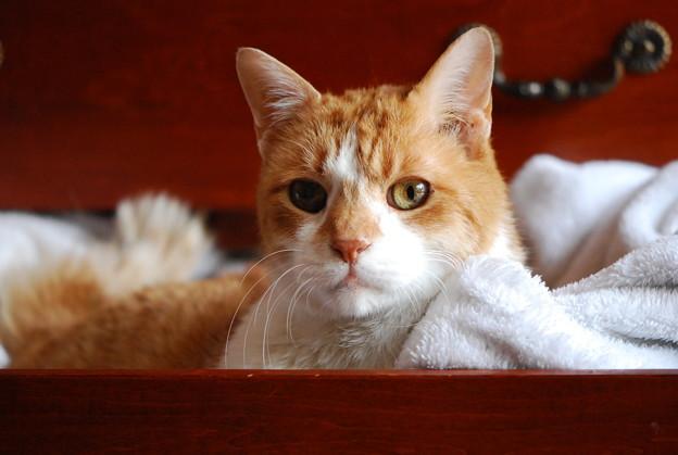 「第49回モノコン」A Cat in a Drawer