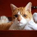 写真: 「第49回モノコン」A Cat in a Drawer