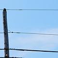 Photos: 「第51回モノコン」Telephone Pole 5-20-12