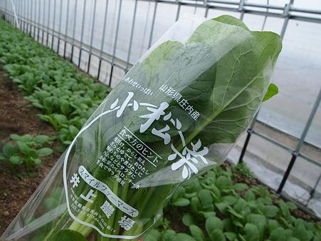 小松菜摘み放題