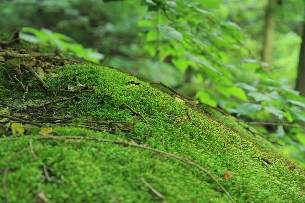 森の精の棲むところ