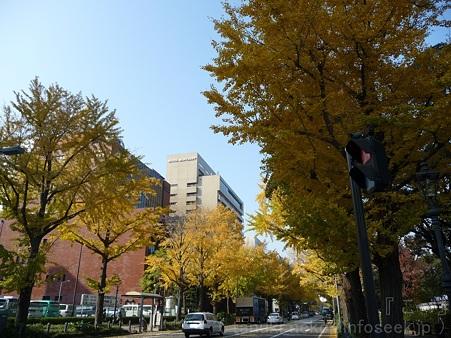 111130-横浜 紅葉  山下公園通り (16)