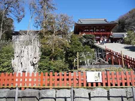 120209-八幡さま (5)