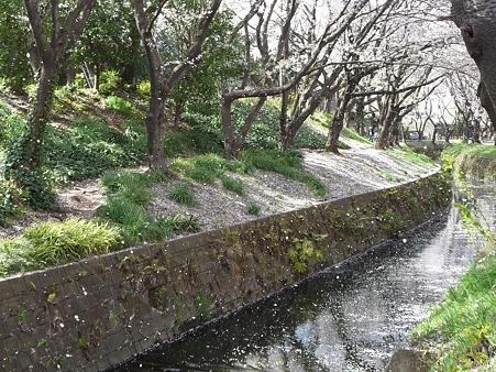 120412-千本桜 (32)