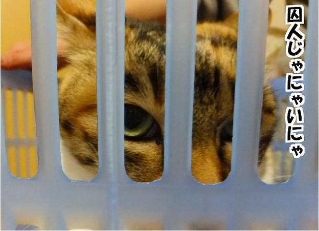 檻に入った猫!?
