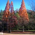 写真: 大きなセコイアの木の下で