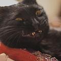 写真: 鬼顔の猫