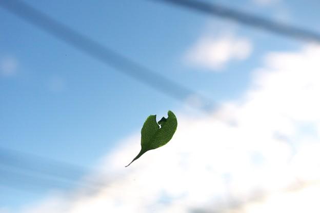 2011.09.22 居間 台風15号 貼り土産