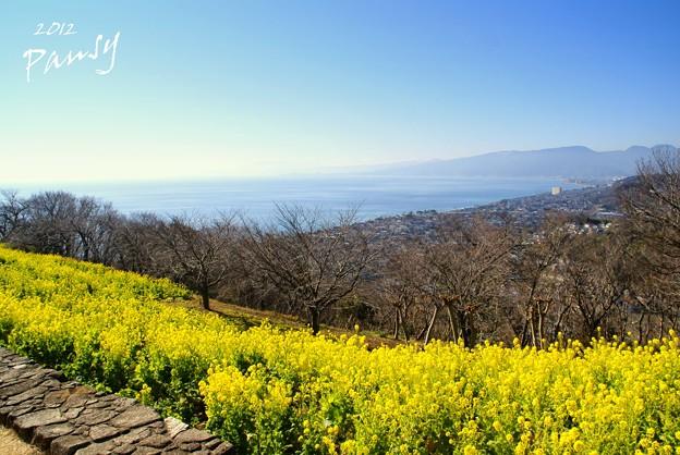 写真: 菜の花畑 2012・・12