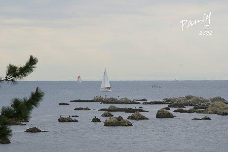 海鳥のいる岩礁・・森戸海岸・・3