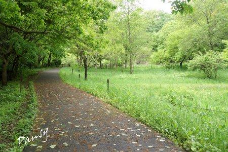 緑の散歩道・・19