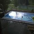Photos: でも、プールはダメ。日が反射してキレイ。