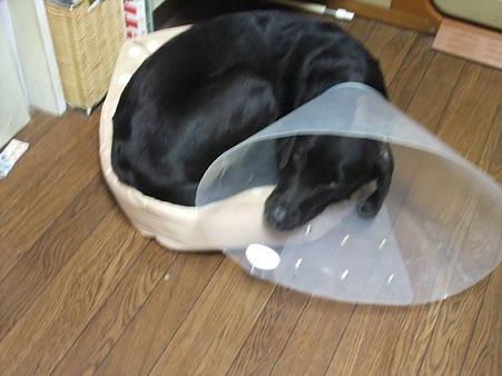 新調したベッド(注・・・小型犬用)