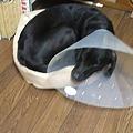 Photos: 新調したベッド(注・・・小型犬用)
